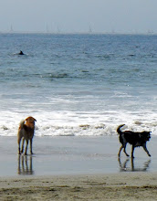 Photo: Dolphins off of the dog beach on Coronado Island