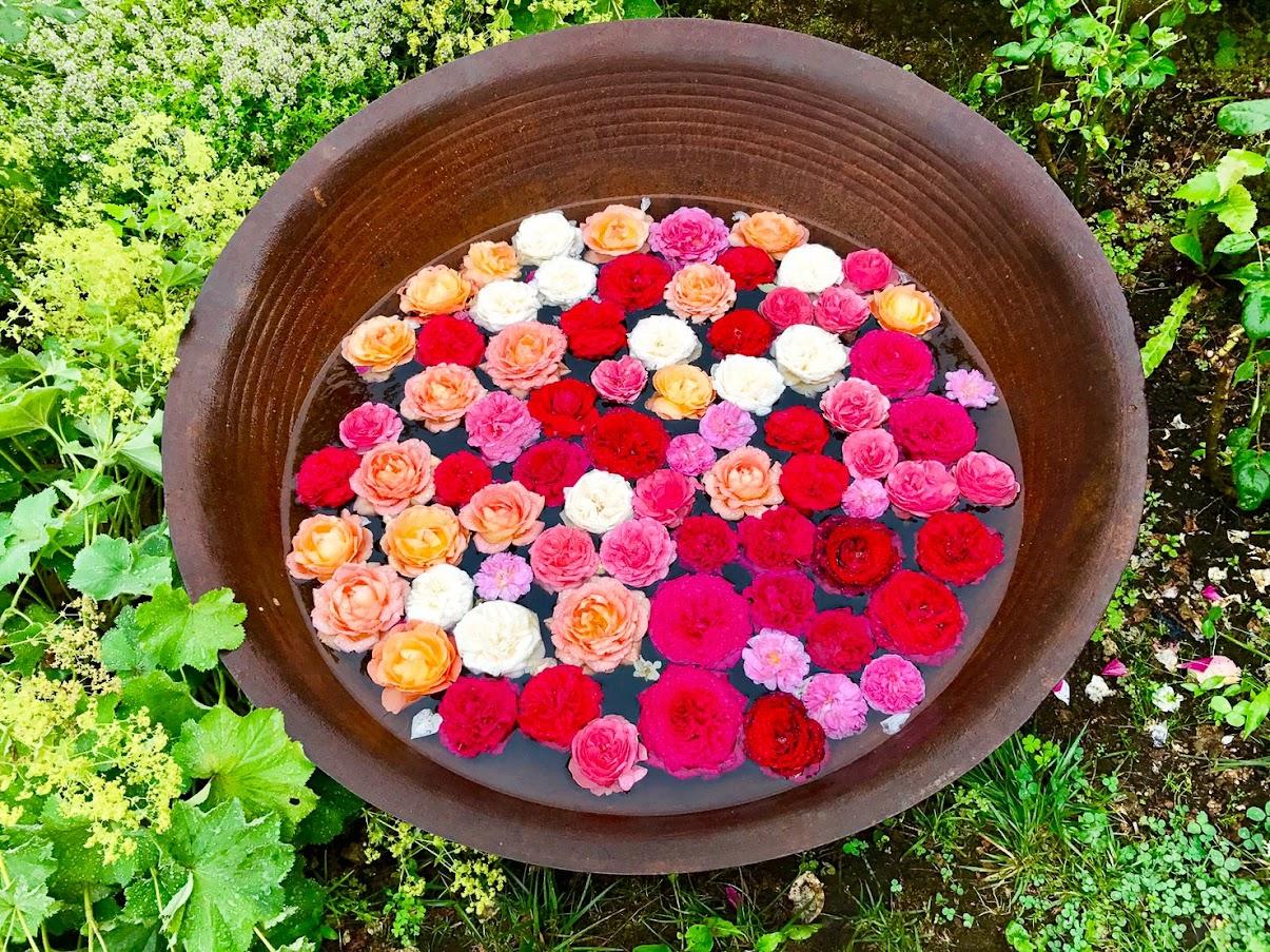 水に浮かぶ優美な薔薇