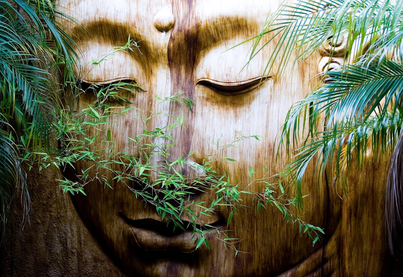 Ulivo e Buddha di Iolanda Pompilio