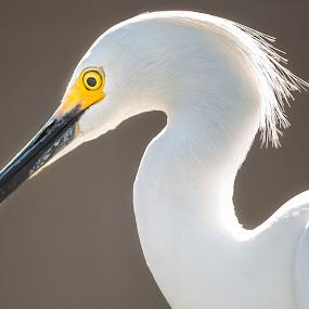 by Rajib Bahar - Animals Birds (  )