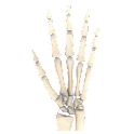 VR Human Hand icon