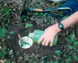 Photo: Pitfall trap with condiment cup of swine feces clipped on the side Note collapsible shovel in background