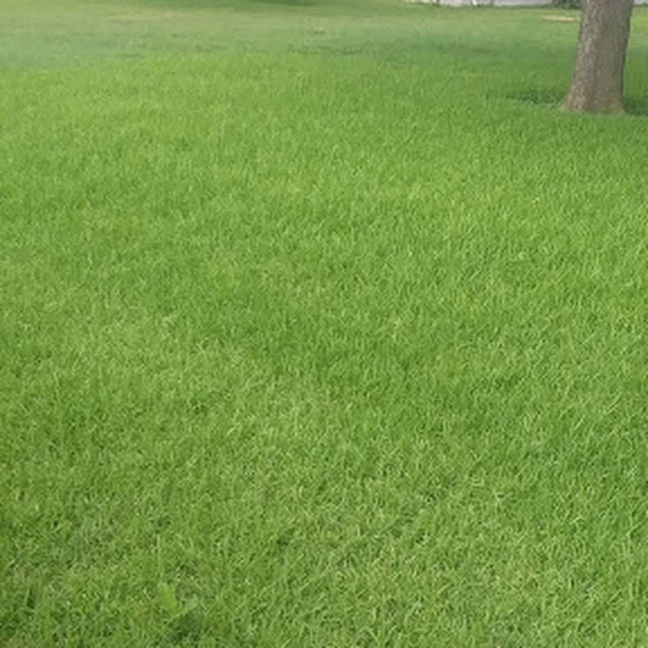 The Lawn Care Crew 2020 - Lawn Care Service in San Antonio