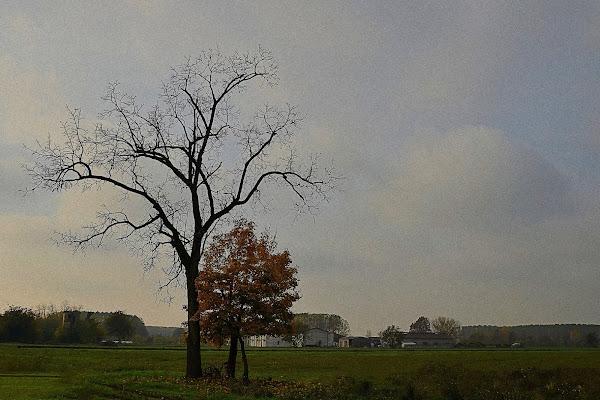Due alberi  di Wilmanna