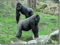Zoo Duisburg - Misc 30