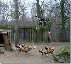 Zoo Duisburg - Dogs 20