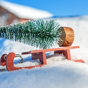 by Grigor  Ivanov - Public Holidays Christmas ( festive, gift, old, seasonal, merry, sleigh, snowflake, shine, tape, cute, space, bokeh, fir, miniature, lights, carrying, tree, toy, transport, happy, snow, ribbon, card, pine, symbol, greeting, decoration, xmas, white, christmas, sledge, fun, holiday, present, pure, december, new, wooden, red, winter, season, background, celebration )