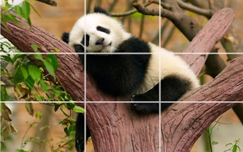 Puzzle – Bears and penguins 1