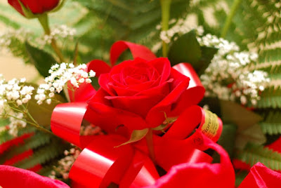 Rose rosse di Bluzenit