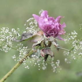 Delicate Flower by Nancy Senchak - Flowers Single Flower