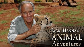 Jack Hanna's Animal Adventures thumbnail