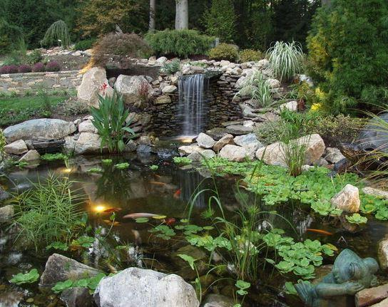 Fish In Backyard Pond Crossword :  water garden odds are you ve thought you might attempt to build a fish