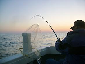 Photo: 1投目オナガを釣り、その次!! バコーン!とウキが入り、強烈な引き! 格闘時間25分! 上がってきたのは・・?