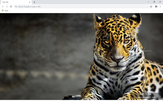 Cheetah New Tab & Wallpapers Collection