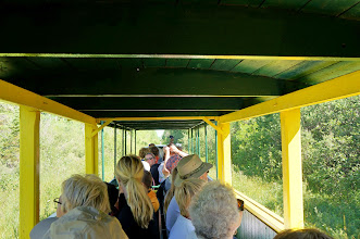 Photo: View Upper Peninsula Wildlife from the comfort of your TOONERVILLE TROLLEY seat.  You and your family will experience a truly unique one-of-a-kind UP tour through the Tahquamenon Forest.