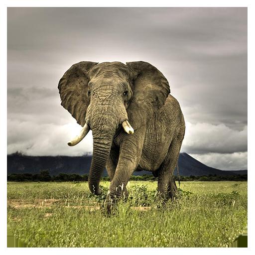無料休闲Appの野生動物のジグソーパズル|記事Game