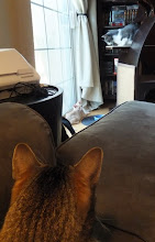 Photo: Foreground: Cairo Level 2: Oslo Subject of their undivided attention: Finley