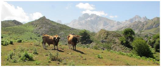 Photo: Dos buenos ejemplares de toro, contemplan mi paso por el lugar. Estamos muy próximos a Pan de Carmen.