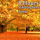 8 Hours of Relaxing Nature Sounds