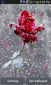 Snow Rose - Live Wallpaper screenshot 0