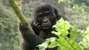 Greatest Apes thumbnail