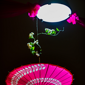 Pink Umbrella by Ray Shiu - Artistic Objects Other Objects ( decor, umbrellas, spindle, shield, flowers, light, spokes,  )