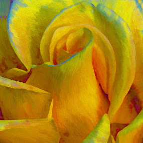 yellow rose by John Kolenberg - Digital Art Things ( rose, roses, yellow, flower,  )