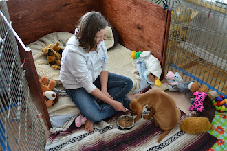 Photo: It was Akela's lunchtime and also egg finding time. Akela wouldn't eat with all the excitement, so Joclynne fed her with a spoon so she could go outside with us.