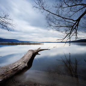 placid lake by Ivano Cheli - Landscapes Waterscapes ( water, tree, nature, lake )