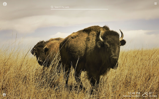 Buffalo HD Wallpapers New Tab Theme