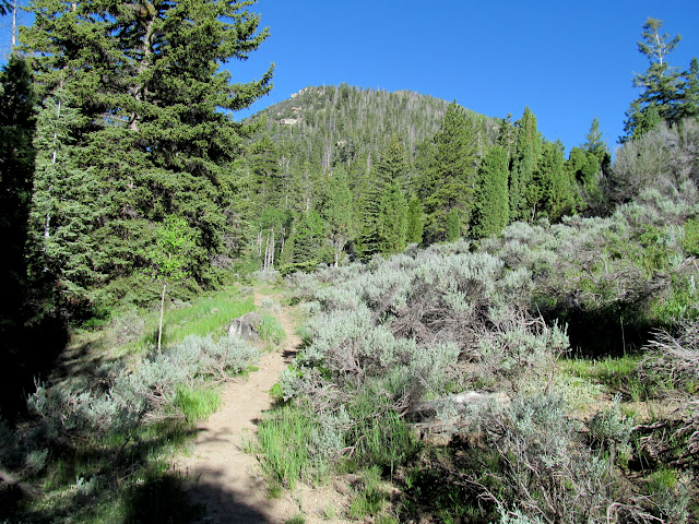 Mill Fork Canyon trail