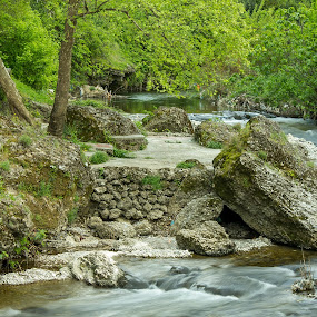 River Ribnica by Zoran Savic - Nature Up Close Leaves & Grasses ( nature, grass, podgorica, river )