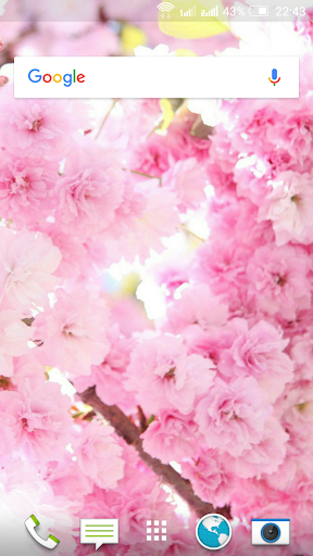 Spring Flowers Wallpapers 4K for PC