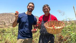 Harvest Adventures thumbnail