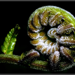 Bending fern by Madihi Ata - Nature Up Close Flowers - 2011-2013