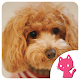 Beautiful Poodle toy images