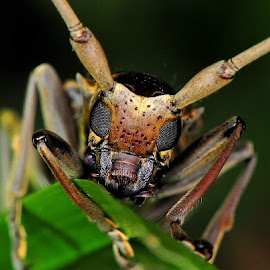 by David Lee - Animals Insects & Spiders
