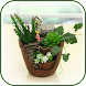 Creative Ideas Plant Offline - Androidアプリ