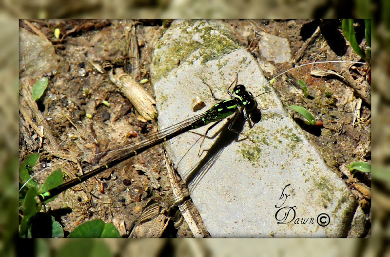 Photo: Dragon Fly getting some sun