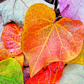 Fall Drop by Glen John Terry  - Nature Up Close Leaves & Grasses (  )