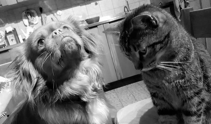 Come Cane e Gatto di NichieNike
