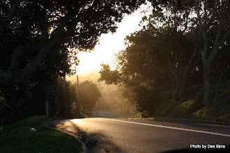 Photo: Year 2 Day 231 - A Beautiful Sunny Evening