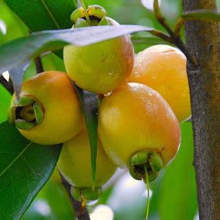 Pear and Plum Crisp
