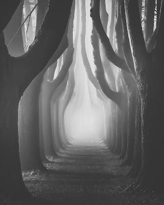 Il fascino della nebbia di maxlazzi