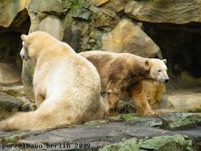 Photo: Knut spaziert mal an ihr vorbei ;-)