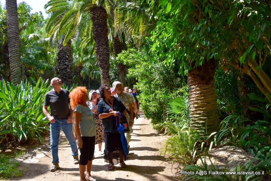 На экскурсии в тропическом саду парка Яркон с гидом в Израиле Светланой Фиалковой.