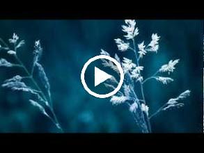Video: Antonio Vivaldi  Concerto for viola d'amore, strings   b.c. in A major (RV 396) -
