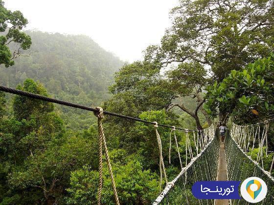 پارک ملی تامان در مالزی