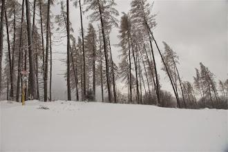 Photo: Vysokánske stromy na vrchole