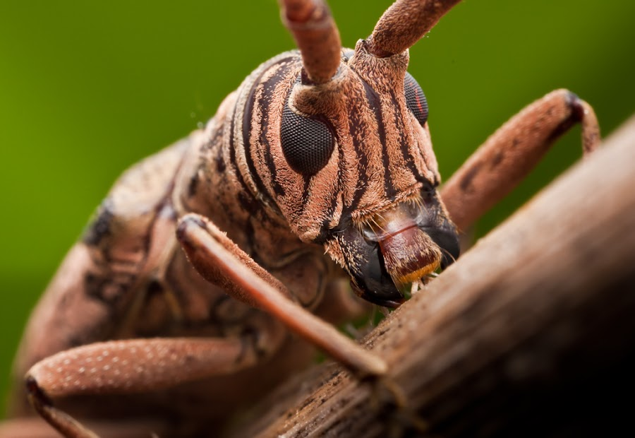 by James Ac - Animals Insects & Spiders